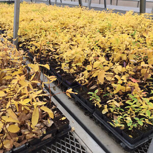 Dormant stock fruit trees. Great for fall planting!