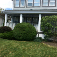 AFFORDABLE TREE PRUNING AND HEDGE TRIMMING