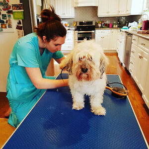 Pet Grooming Services - Well Groomed Mobile