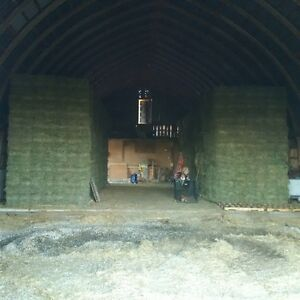 FIRST CUT HAY- SMALL SQUARES