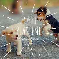 PUPPY PLAYTIME FRIDAYS