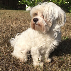 STILL MISSING! SMALL * WHITE * DOG