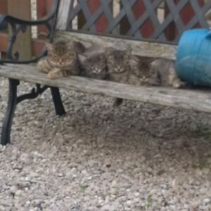 Kittens/Cats in Need of a New Home