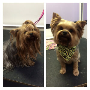 Dog and Cat Grooming Services Windsor Region Ontario image 5