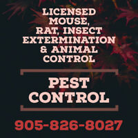 MOUSE, RAT, INSECT REMOVAL. LICENSED PEST CONTROL. 905-826-8027