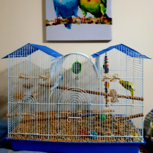 Parakeets and all the equipment
