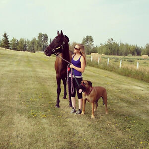 Acreage and City Live In Pet Sitting