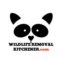Wildlife Removal - Squirrel & Raccoon Removal Kitchener