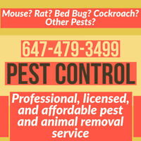 SQUIRREL RACCOON RAT MOUSE BED BUG, PEST CONTROL, ANIMAL REMOVAL