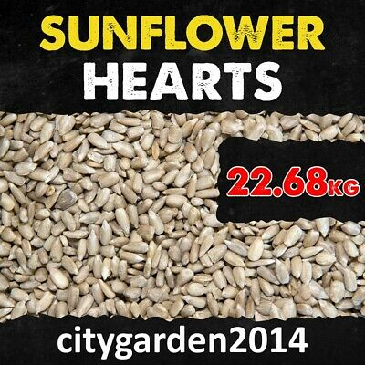 22.68kg Sunflower Hearts Wild Bird Food PREMIUM GRADE Dehulled Kernels Seed