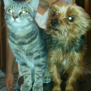 I Lost my small dog Yorkshire terrier 4 1/2 lb