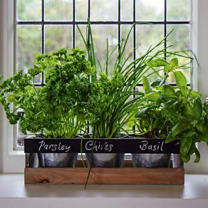 Indoor Herb Garden Kit Wooden Windowsill Planter Grow Your Own Herbs ...