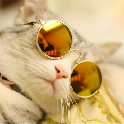 UV SUNGLASSES - FOR CATS, SMALL DOGS OR YOUR DOLL COLLECTION (6-COLOR (Sunglasses For Cats)