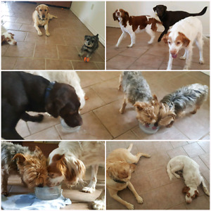 Dog Daycare with no kennels? No hours? - Accepting New Dogs Now!