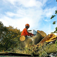 Tree Services.  Tree Removal.  Best Prices