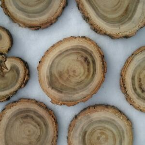 locust tree wood cookies