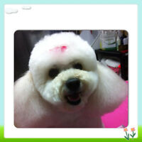 Professional dog grooming in the SE- Midnapore