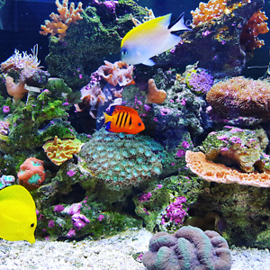 Mixed Coral Reef Tank