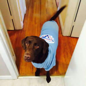 Dog boarding for my Chocolate Lab