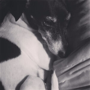 Looking for a dog sitter/walker for our Italian Greyhound Mix