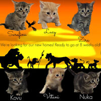 Kittens available for adoption!