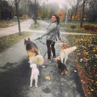plateau outremont dog walking overnight doggy sitting chien prom