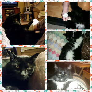 2 male neutered male cats to give away to a loving home