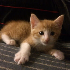 Looking for forever home