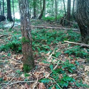 half acre treed lot on Ships Point