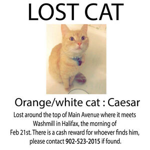 Please help bring my cat home