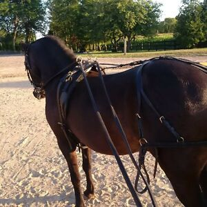 Black Leather Pony Harness London Ontario image 1