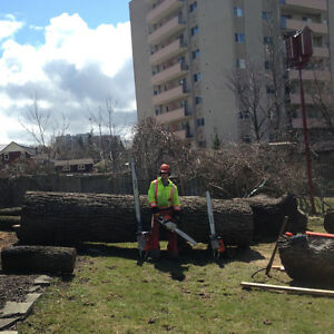 Tree Removal & Log Milling Kitchener / Waterloo Kitchener Area image 3