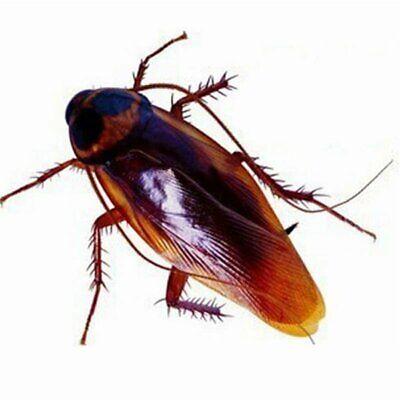 48x Fake Cockroaches Lifelike Realistic Creepy Roach Bugs Prank Joke Trick Toy (Halloween Pranks)