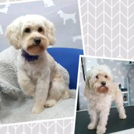Dog groomer Maryhill Glasgow