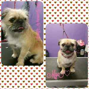 One on one pet grooming  Peterborough Peterborough Area image 6