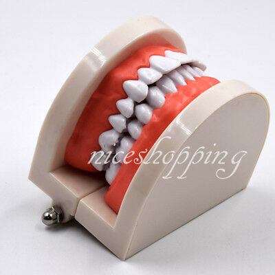 1 Pcs Dental Standard Teaching Study Model Dentist Patient Teeth Tooth Models