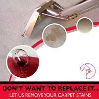 Why book with Cardinal for your Carpet Cleaning needs?