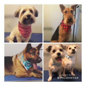 Professional and Affordable Dog Grooming