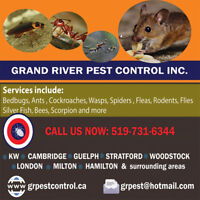 Affordable + Reliable Pest Control Services in Stratford