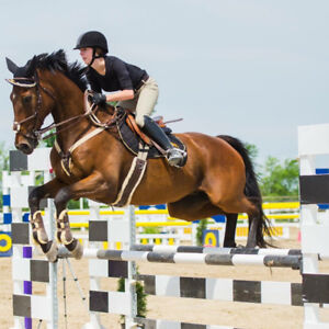 1.20m + Jumper for sale