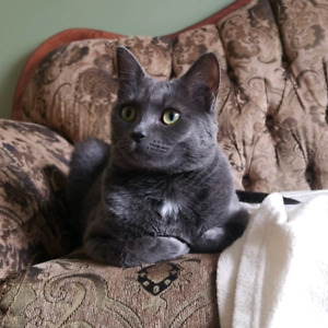 Lost female cat Mayfield