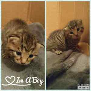 Kittens looking for forever home