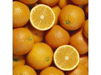 Orange Hardy Garden Fruit Trees
