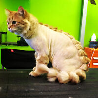 WALK INS WELCOME! Need your dog or cat Groomed today!