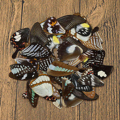 50 Pcs Real Butterfly Wings DIY Jewelry Artwork Art Hand Craft Random Gift