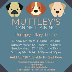 Puppy Socialisation - Puppy Play Classes