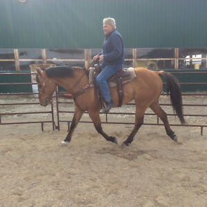 Riding Horse Auction Wednesday June 15/2016 4pm view6 pm Sale