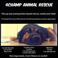 Donations Needed (4Champ Animal Rescue)