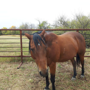 Horse for sale  3500