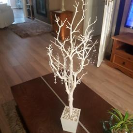 White Menzanita Trees x 8